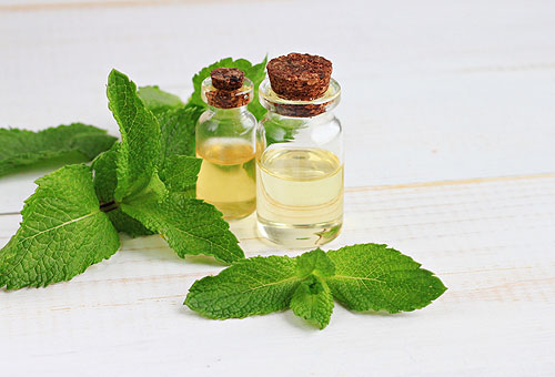 Mint leaves and oils